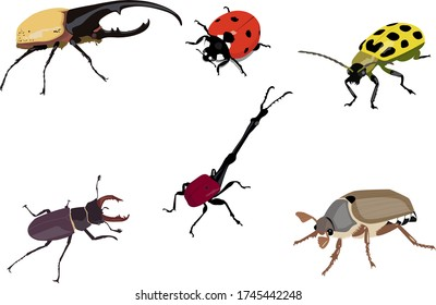 different kinds of beetles vector art
