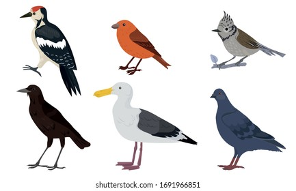 Different kinds of city birds vector illustration