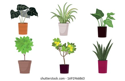 Different kinds of green blooming home plants in pots vector illustration