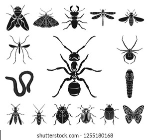 Different kinds of insects black icons in set collection for design. Insect arthropod vector symbol stock web illustration.