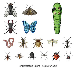 Different kinds of insects cartoon icons in set collection for design. Insect arthropod vector symbol stock web illustration.