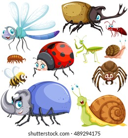 Different kinds of insects illustration
