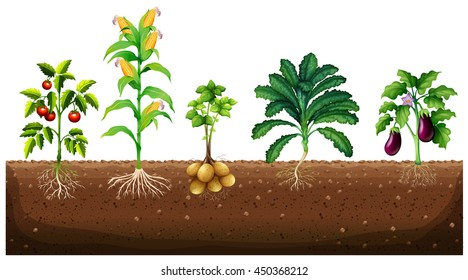 Vegetable Plants Images Stock Photos Amp Vectors Shutterstock