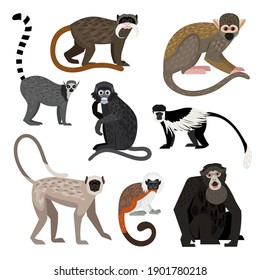 Different monkey set. Cartoon primates of wildlife, funny zoo characters, colobus ring-tail lemur bolivian squirrel monkey siamang emperor tamarin dusky leaf monkey hanuman langur cotton top tamarin