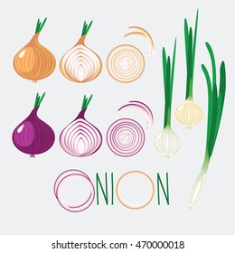 Different onions vector icon.