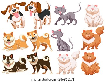 Different pecies of dogs and cats
