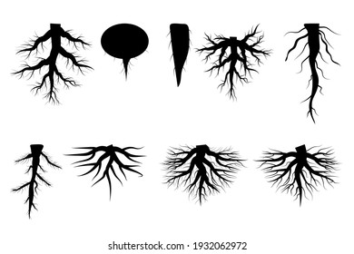 Different roots. White background. Nature vector. Floral pattern. Stock image. EPS 10.