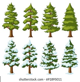 Different shapes of pine trees illustration