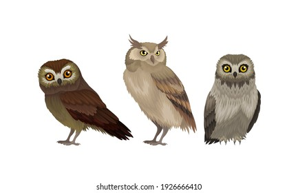 Different Species of Owls as Nocturnal Birds of Prey with Hawk-like Beak and Forward-facing Eyes Vector Set