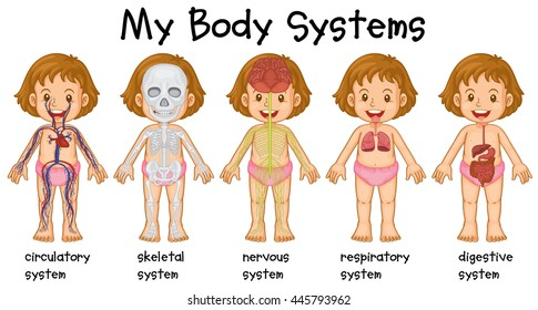 Different systems in human being illustration