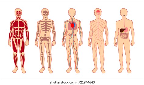 Six Main Human Body Systems High Stock Illustration 19834270 ...