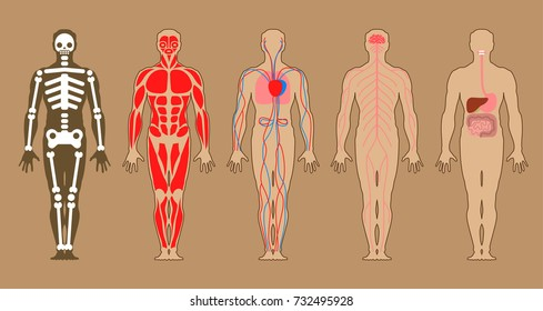 Whole human anatomy all human body stock illustration 523610425 different systems of human body diagram illustration ccuart Choice Image