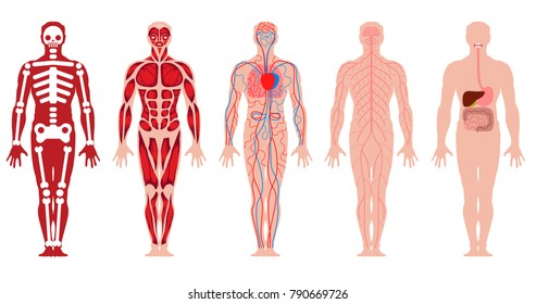 Different Systems Human Body Diagram Illustration Stock Photo Photo
