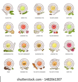 Different tea types - vector illustration set. Colorful herbal drink collection in glass teacup and plate seen from top view, isolated beverages with flower, hand drawn fruit and berries arrangement