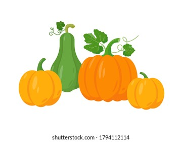 Different tipes of pumpkin on white background. Yellow, orange and green pumpkin vector illustration.