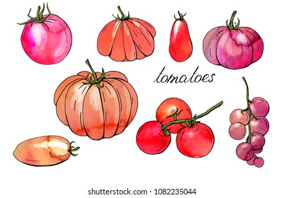 Different tomatoes. Isolated fresh vegetables, different sorts. Watercolor effect