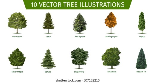 Different tree sorts with names. Illustrations of tree types and specimens. Ash, fir, oak, walnut, chestnut, cherry, apple tree, maple, pine, larch, birch, spruce, aspen, cedar & other.