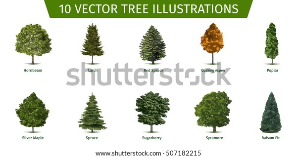 Christmas Leaf Name.Different Tree Sorts Names Illustrations Tree Stock Vector
