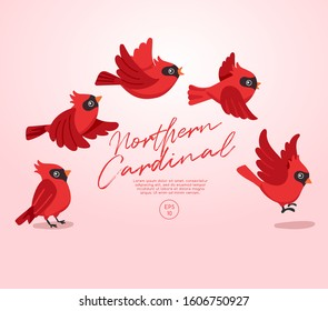 Different type of birds collection : Flying Northern Cardinal : Vector Illustration