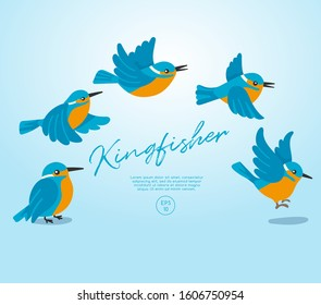 Different type of birds collection : Flying Kingfisher : Vector Illustration