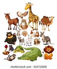 Different type of wild animals illustration