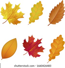Different types of Autumn Leaves Set, Vector Illustration.