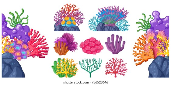 Different types of coral reef illustration