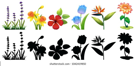 Different types of flowers and silhouette illustration