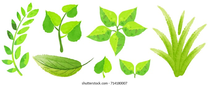 Different types of green leaves in watercolor style illustration