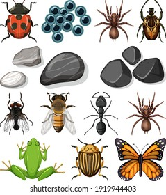 Different types of insect with nature elements illustration