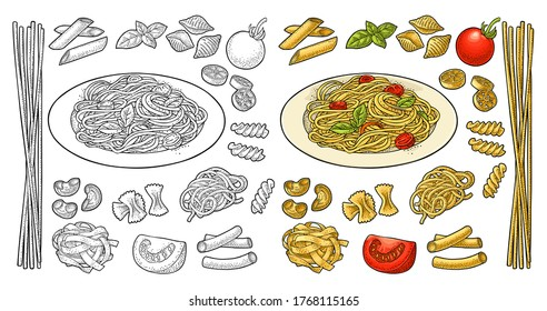 Different types macaroni and spaghetti on plate. Farfalle, conchiglie, maccheroni, fusilli, penne, pipe, ruote, fettuccine, tomato, basil isolated on white. Vector vintage color engraving