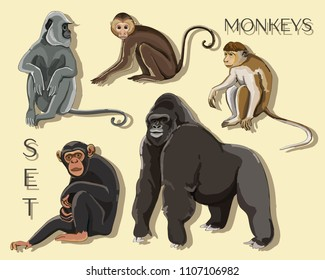 Different types of monkeys. Vector illustration, EPS 10