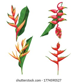 Different types of tropical flowers Heliconia. Heliconia bihai, rostrata and others. Blooming tropical floral. For wedding invitations and greeting cards. Vector illustrations.