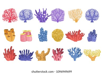 Different Types Of Tropical Reef Coral Collection
