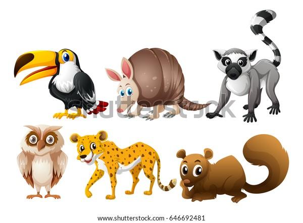Different Types Wild Animals Illustration Stock Vector (Royalty ...