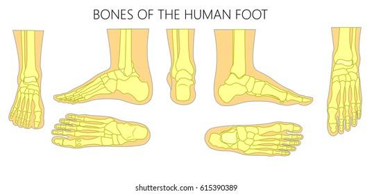 Human Foot Images, Stock Photos & Vectors | Shutterstock