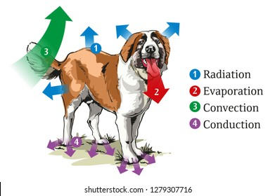 Different ways of heat transfer at the dog.
