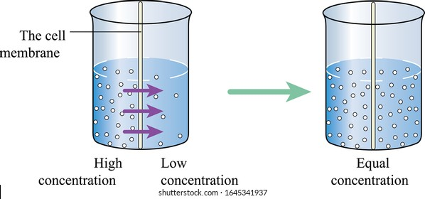 Diffusion-the process in which small molecules move, High concentration to Low concentration, Chemical diagram