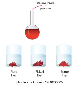 Digestive enzyme and phenol red assay