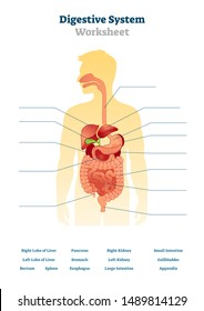 Digestive system worksheet vector illustration. Blank inner organs scheme. Educational gastrointestinal diagram template for school practice course tests. Learn from gastric workbook printable task.