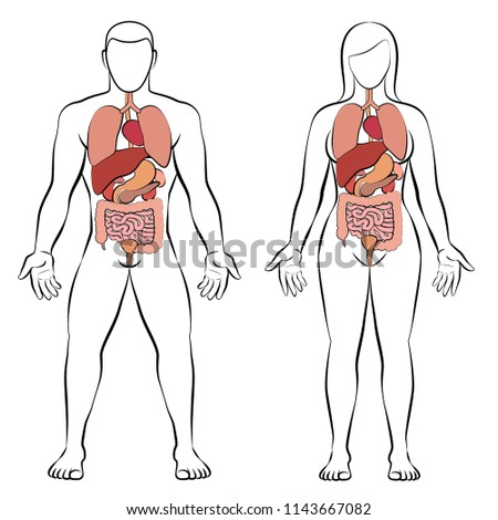 Digestive Tract Internal Organs Male Female Stock Vector Royalty