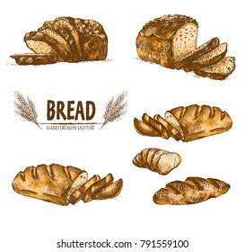 Digital color vector bundle set detailed line art golden loaf of rye bread, slices and wheat hand drawn illustration set. Thin artistic pencil outline. Vintage ink flat, engraved mill doodle sketches
