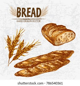 Digital color vector detailed line art golden loaves of ciabatta bread and baguettes, wheat hand drawn retro illustration set. Thin outline. Vintage ink flat, engraved mill doodle sketches. Isolated