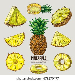Digital vector detailed line art color pineapple fruit hand drawn retro illustration collection set. Thin artistic pencil outline. Vintage ink flat style, engraved simple doodle sketches. Isolated