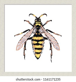 Digital watercolor big wasp. Hand drawn insect illustration, detailed vector art. Isolated bug on white background in a light-colored wooden frame.