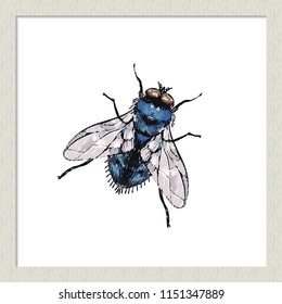 Digital watercolor blue fly. Hand drawn insect illustration, detailed vector art. Isolated bug on white background in a light-colored wooden frame.