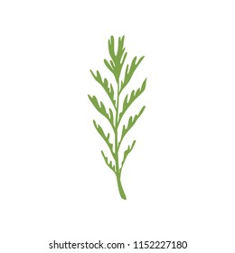 Dill salad rosemary leaf, vegetarian healthy food, organic culinary aromatic herb vector Illustration on a white background