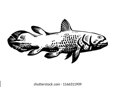 Dinichthys, prehistoric fish. Lobe-finned fish, Sarcopterygii, Coelacanth. Hand drawn vintage engraved vector illustration isolated on white background.