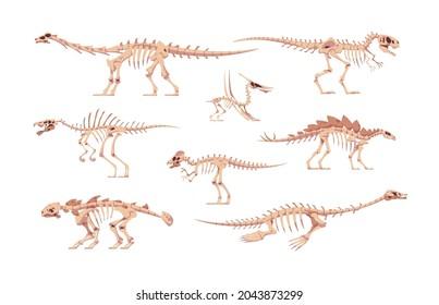 Dino bones. Cartoon dinosaur skeletons for kids illustration. Skulls and body fossil parts of Jurassic raptors. Prehistoric predators and herbivorous. Vector isolated extinct reptiles set