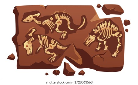 Dinosaur fossil bones, dino skeletons in piece of stone isolated on white background. Old dead prehistoric animals of jurassic ages. Paleontology, archaeology science items Cartoon vector illustration